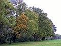 GOC Sandridge to Harpenden 033 Autumn colours (8221561644).jpg