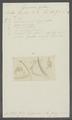 Gammarus podurus - - Print - Iconographia Zoologica - Special Collections University of Amsterdam - UBAINV0274 098 02 0013.tif
