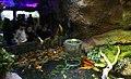 Ganjnameh Cave Aquarium, Nowruz 2018 ( 13970104000148636574826024914327 53118).jpg