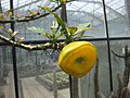 Gardenology.org-IMG 7505 qsbg11mar.jpg