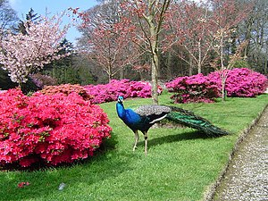 Sithney - Gardens at Trevarno