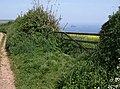 Gateway near Little Dartmouth - geograph.org.uk - 806704.jpg
