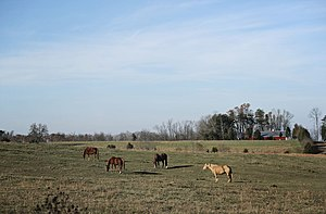 Georgetown, Floyd County, Indiana - Horses graze on a farm along Henriott Road in Georgetown Township.