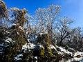 Georgia snow IMG 4832 (38061045415).jpg
