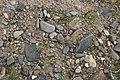 Gesteinsmix in einem Schotterkörper des Cherlen, Mongolei.jpg
