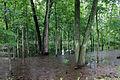 Gfp-wisconsin-madison-marsh.jpg