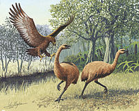 Giant Haasts eagle attacking New Zealand moa.jpg