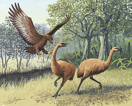 The large Haast's eagle and moa from New Zealand Giant Haasts eagle attacking New Zealand moa.jpg