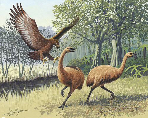 The large Haast's eagle and moa from New Zealand (both extinct) Giant Haasts eagle attacking New Zealand moa.jpg