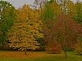 Giardinetto pubblico autunno, Sasso Pisano.JPG