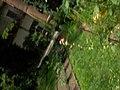 Giardino botanico di Brera (Milan) 307.jpg