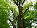 Gießen-Wieseck, Adam und Eva 04.jpg