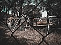 Giraffes in Kano Zoo.jpg