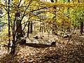 Golden Leaves - High Park (61517898).jpg