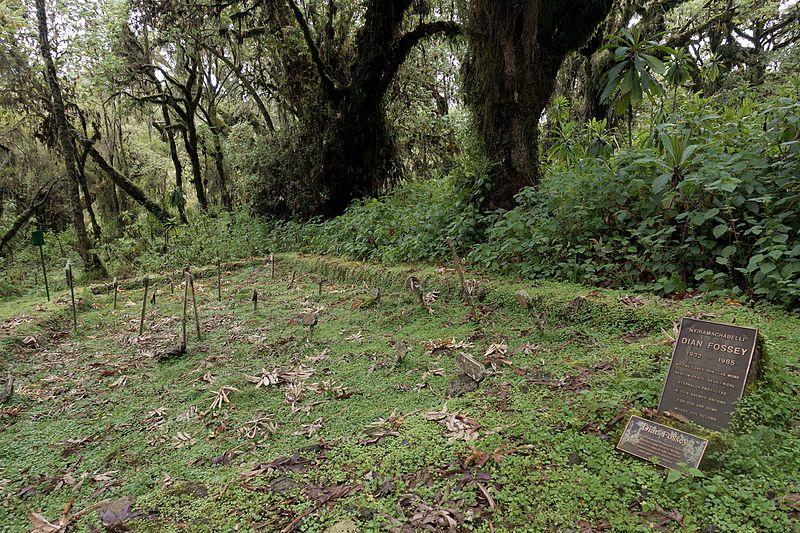 File:Gorilla and Dian Fossey's graveyard.jpg
