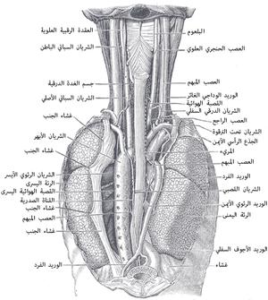 Endoscopic Band Ligation Of Esophageal Varices