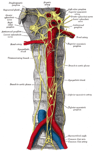Common iliac vein - Abdominal portion of the sympathetic trunk, with the celiac and hypogastric plexuses.  (Common iliac vein labeled at lower right.)