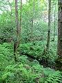 Green - June 2012 - panoramio.jpg