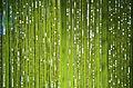 Green Glitter Scene (4113163454).jpg