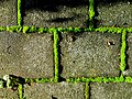 Green outline - Flickr - Stiller Beobachter.jpg