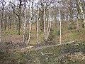 Grimescar Wood, Fixby - geograph.org.uk - 382180.jpg