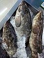 Grouper fish for Sale.jpg