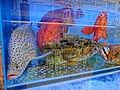 HK Sai Ying Pun 308 Des Voeux Road West 中華麗宮 Ramada Hotel Seafood water pool 28 April 2013.JPG