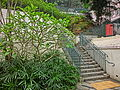 HK Shek Tong Tsui 山道花園 Hill Road Rest Garden stairs n 雞蛋花 tree n stairs April 2013.JPG