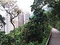 HK hiking 香港 VP 維多利亞山頂 Victoria Peak 舊山頂道 Old Peak Road April 2020 SSG 03.jpg