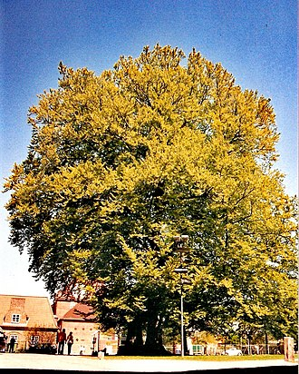 Lübeck Cathedral - Lutheran beech in Lübeck