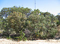 Hamersley tower reserve 1.jpg