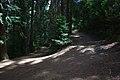 Hanmer Springs Conical Hill Walkway - panoramio.jpg