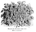 Haricot de Soissons nain vert Vilmorin-Andrieux 1904.png