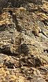 Harihar - Rock cut steps (11253864766).jpg