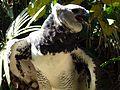 Harpy Eagle Harpia harpyja (8296703903).jpg