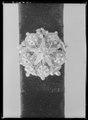 Hattband med guldknappar och tofsar - Livrustkammaren - 61804.tif