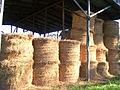 Hay shed.jpg