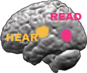 """Deep dyslexia - Activation areas in the left hemisphere when hearing or reading a word. The """"left-hemisphere hypothesis"""", supports the idea of a damaged left hemisphere-based reading system."""