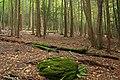 Hemlock Ravine (3) (8013971785).jpg