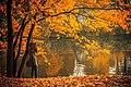 Herastrau park leaves (Unsplash).jpg