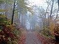 Herbst im Teutoburger Wald 03.jpg