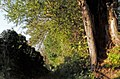 Holle boom langs holle weg - panoramio.jpg