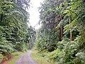 Holz ist elastisch .... - panoramio.jpg