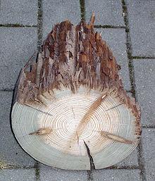 Holzschutz Wikipedia