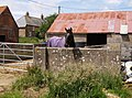 Horse at Pagham - geograph.org.uk - 469775.jpg