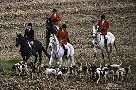 Horses and hounds (15832451122).jpg