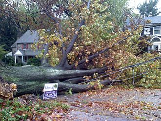 Hurricane Sandy - A downed tree in Cheltenham Township, Pennsylvania.