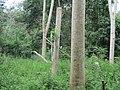 Hutan Sekunder Air hitam.jpg