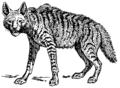 Hyena (PSF).png