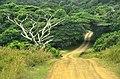 ISimangaliso Wetland Park, gravel road.jpg
